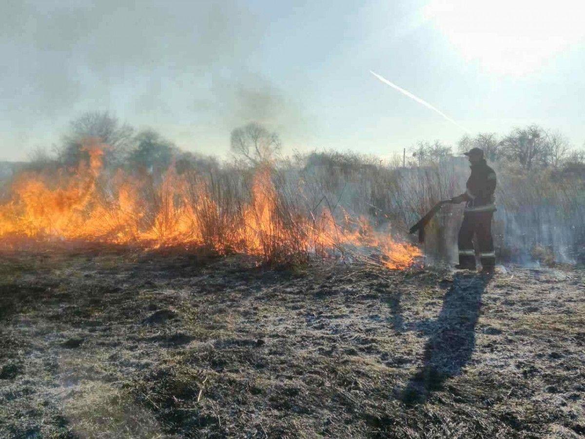 Причиною лісових пожеж на Миколаївщині були підпали, – ДСНС