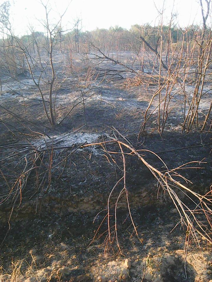"""В Антонівці """"умисно"""" підпалили ліс, щоби звільнити ділянку під котеджне містечко"""
