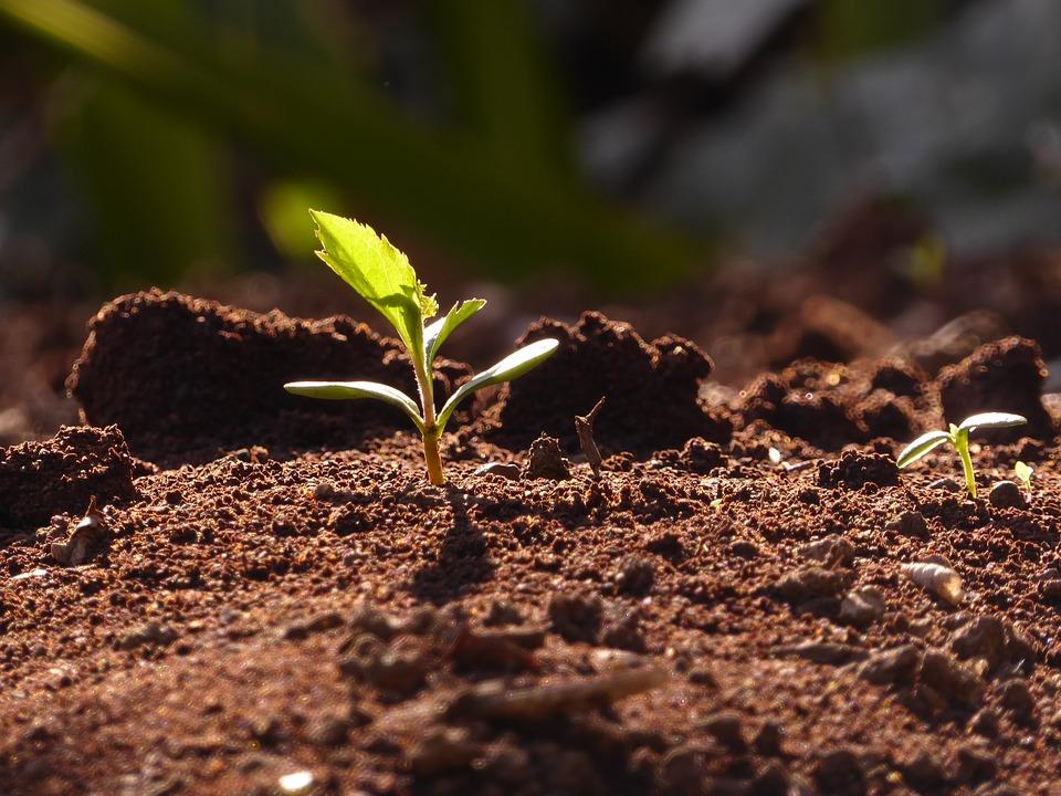 За півтора мільйона доларів США на Херсонщині створять унікальний продукт для рослинництва