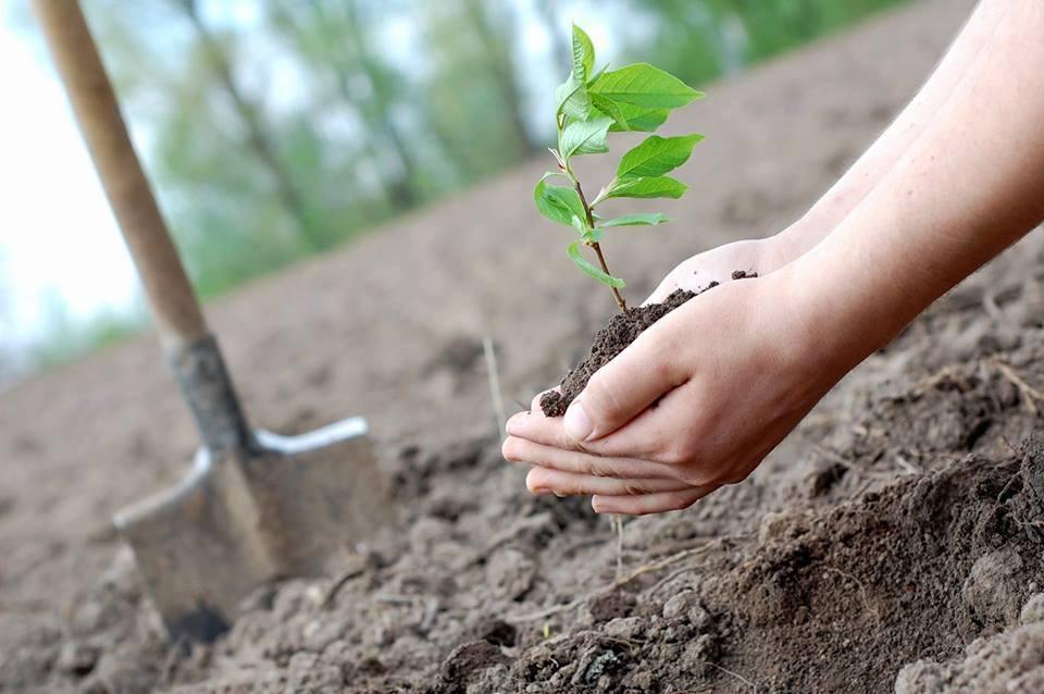 """Понад 200 дерев висадили в еко-садибі """"Райдуга"""""""