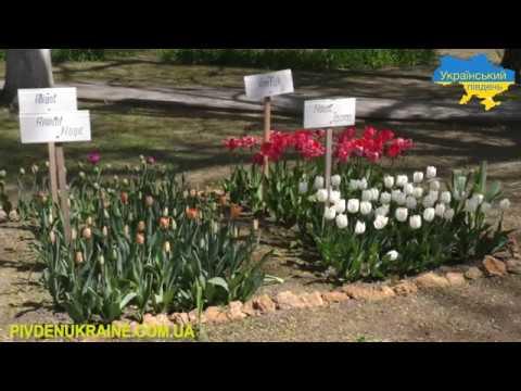 Парад тюльпанів у дендропарку Херсонського аграрного університету