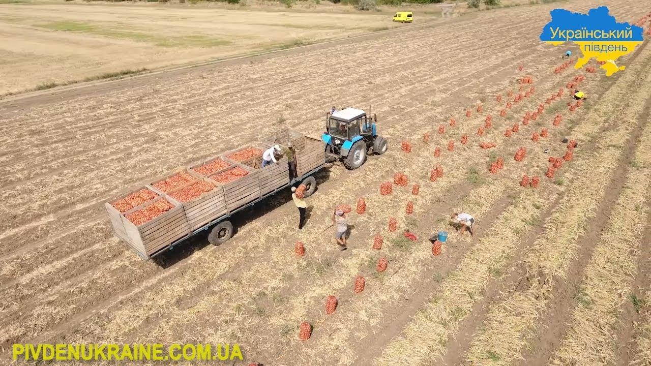Від чого залежать ціни на сільгосппродукцію на Херсонщині (Відео)